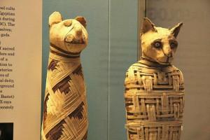 Facts About Mummies, Mummified Animals