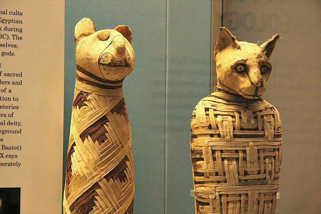 Facts About Mummies, Mummified Animals