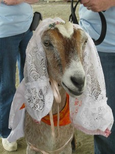 Random Fun Facts, Sudanese Man Marries a Goat
