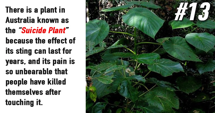15 Strange But Interesting Facts About Plants
