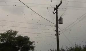 Spider rain in brazil