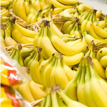 Domestication of Fruits and Vegetables, Modern Banana
