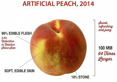 Domestication of Fruits and Vegetables, Modern Peach