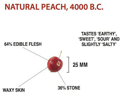 Domestication of Fruits and Vegetables, Wild Peach