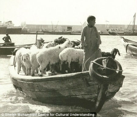 Dhows were used to transport livestock