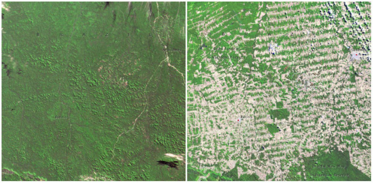 Forests in Rondonia, Brazil