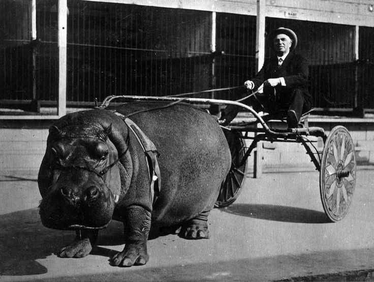 Hippo cart in 1924