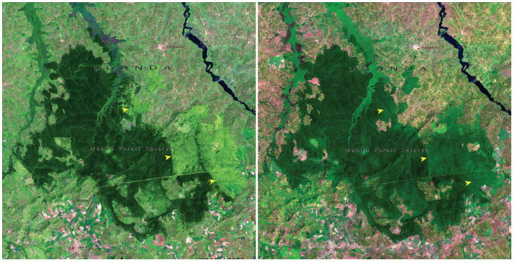 Mabira Forest, Uganda