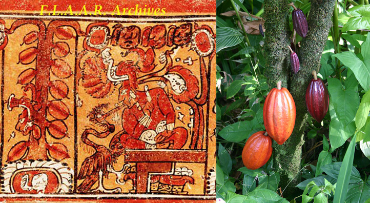 Mayans relation with cocoa