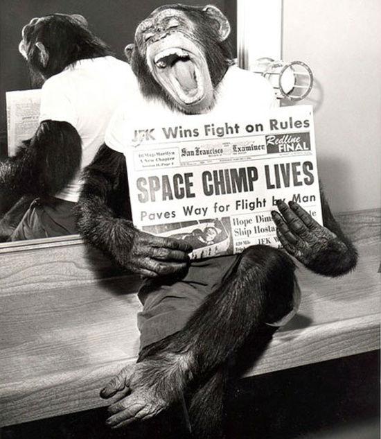 The Astrochimp