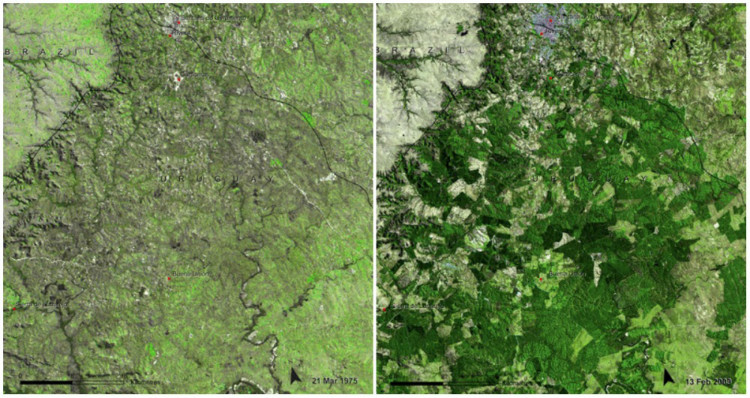 Uruguay Forests
