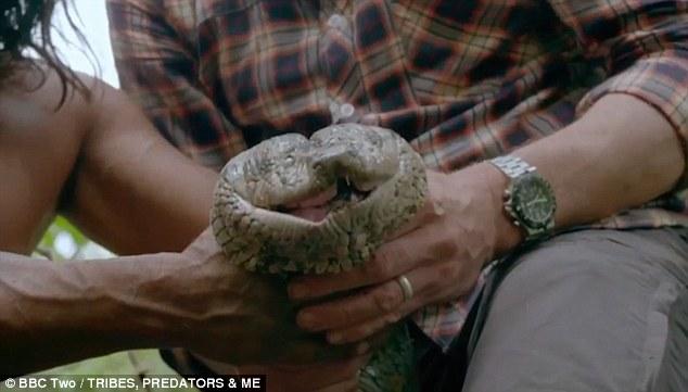 Anacondas Mouth 43