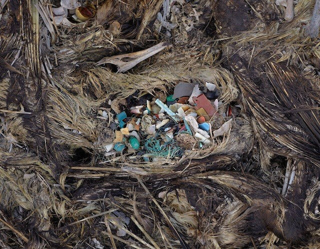 Plastic in soda bottles causes birds to starve to death