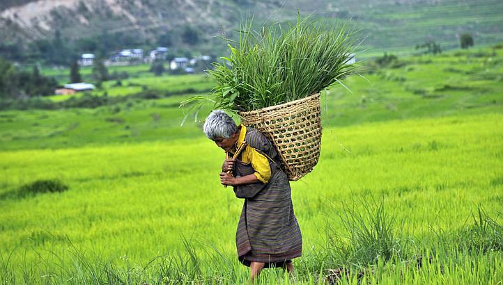 Organic farming in Bhutan
