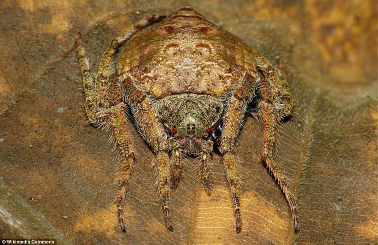 spiders concave underside