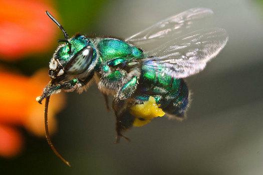 Image result for bazinga bee