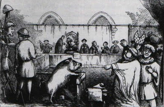 animal on trial