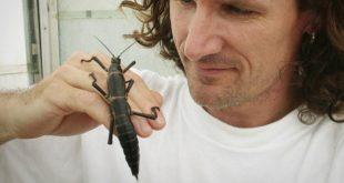 Tree Lobsters of Lord Howe Island