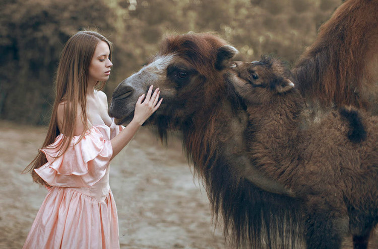 camel and baby