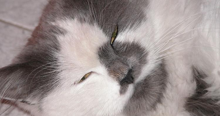 cat winks
