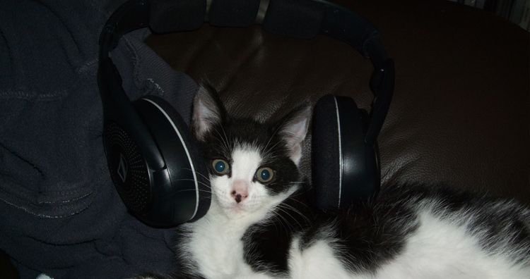 cat and music