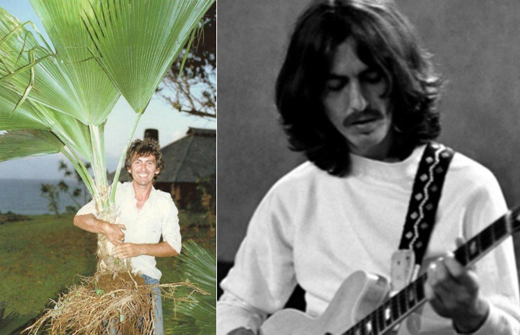 George Harrison of The Beetles
