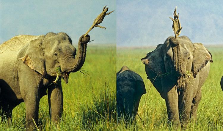 Elephant and Lizard