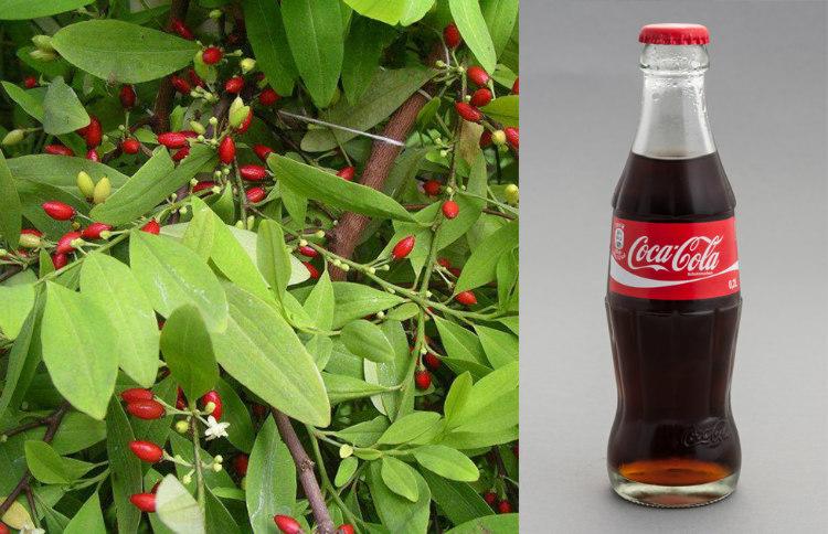 Coca Leaf and Coca-Cola