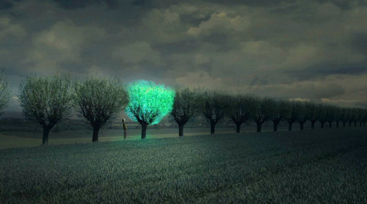 Bioluminescent Trees