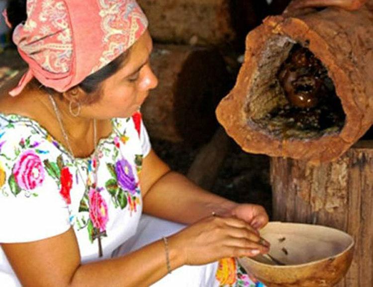 Mayan Stingless Bees