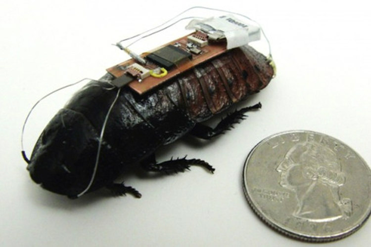 Bionic Insects