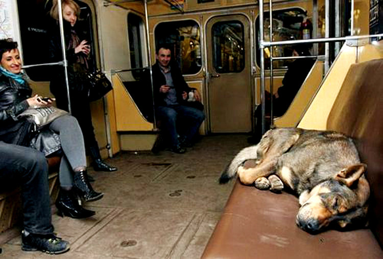 Stray Dogs in Moscow