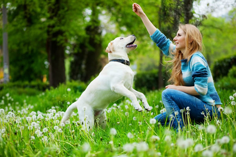 Dogs Can Visual Cues