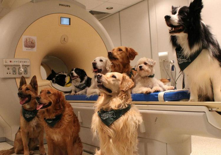 Dogs Understanding Humans