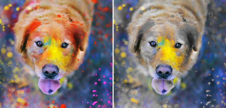 Dogs and Colors