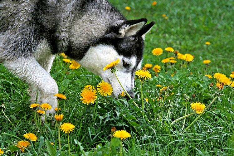 Dogs and Smells