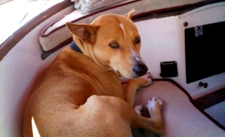 Kankuntu, the Brave Hunting Dog