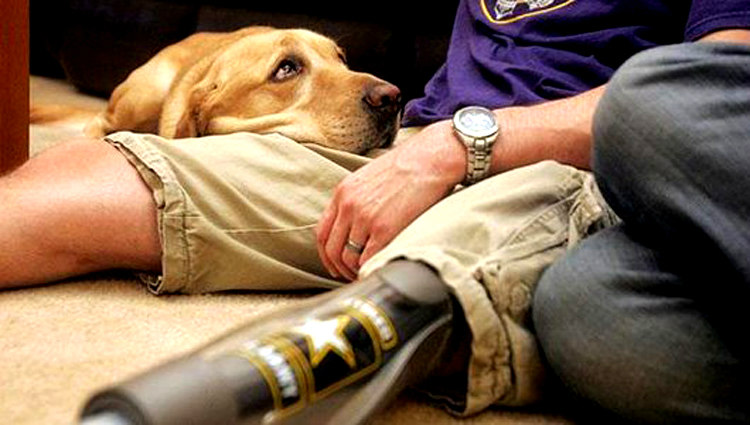 Military Service Dogs and PTSD