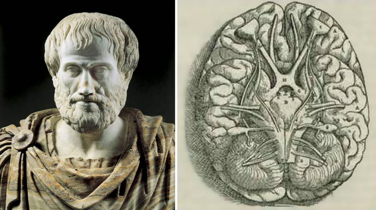 Aristotle and Brain
