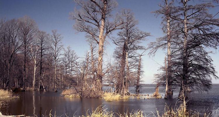 Reelfoot Lake in Tennessee