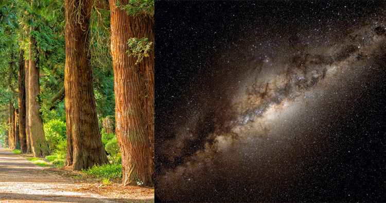 There are more trees on Earth than there are stars in the Milky Way galaxy