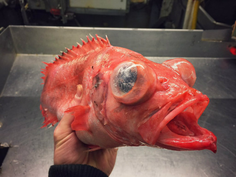Creature from the Deep-Sea