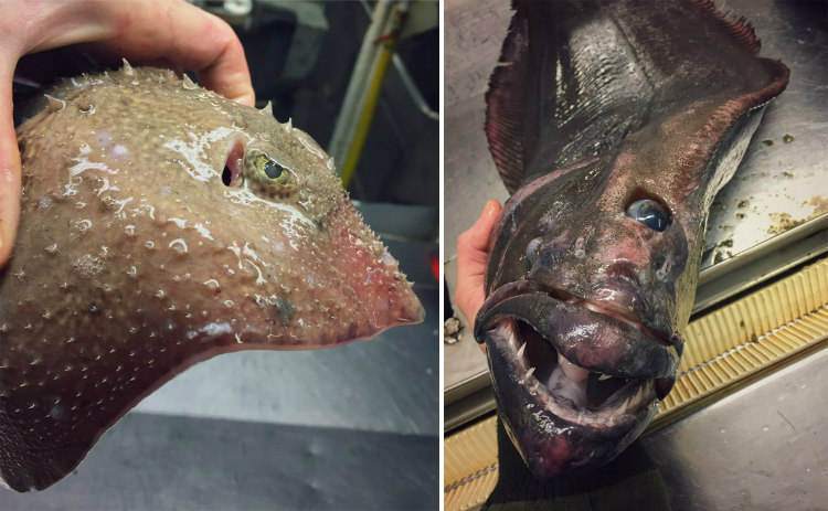 Creatures from the Deep-Sea