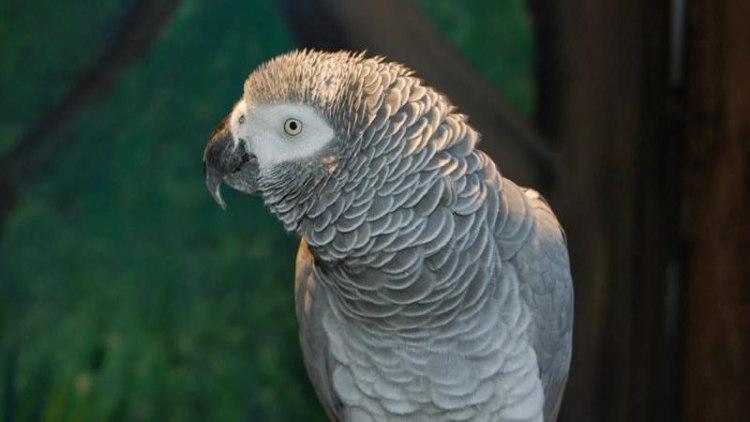 Einstein, the Parrot