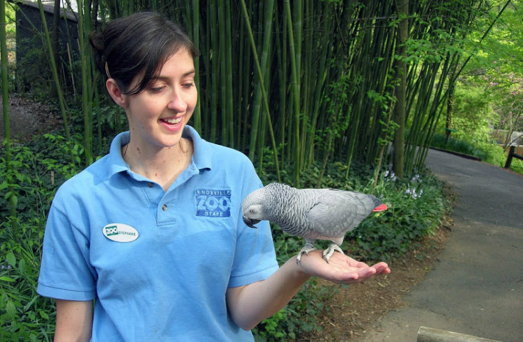 Einstein, the African Grey Parrot at Knoxville