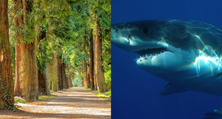 Shark and trees
