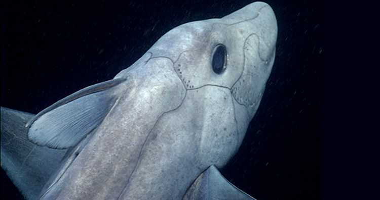 Deep Sea Quot Ghost Shark Quot Caught On Camera For The First Time