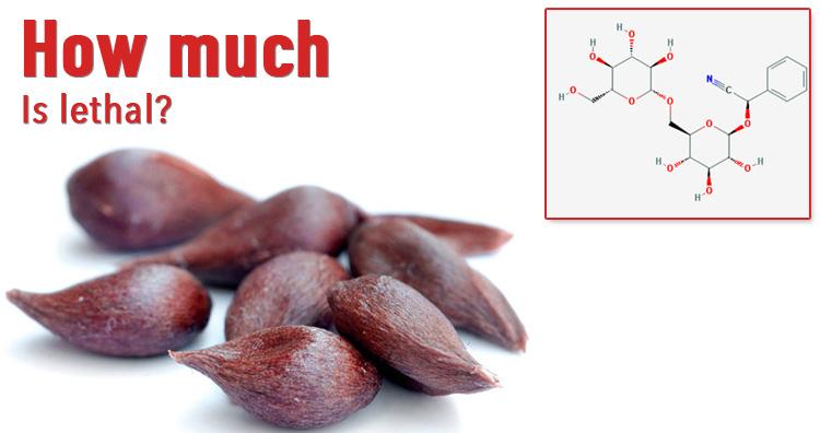 apple seeds cyanide