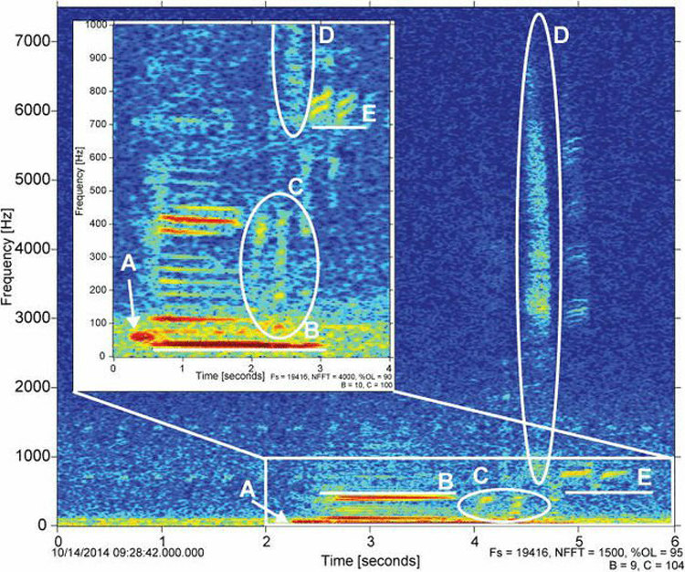 Frequencies of the Minke Whale's Metallic Twang