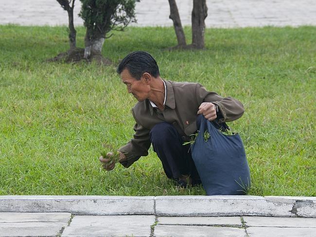Grass picking